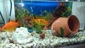 金魚の水草1